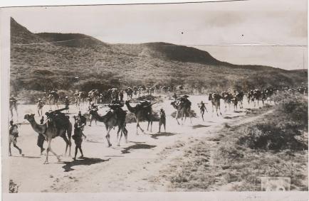 Italian camel corps