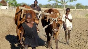 Zimbabwe Masvingo farmer