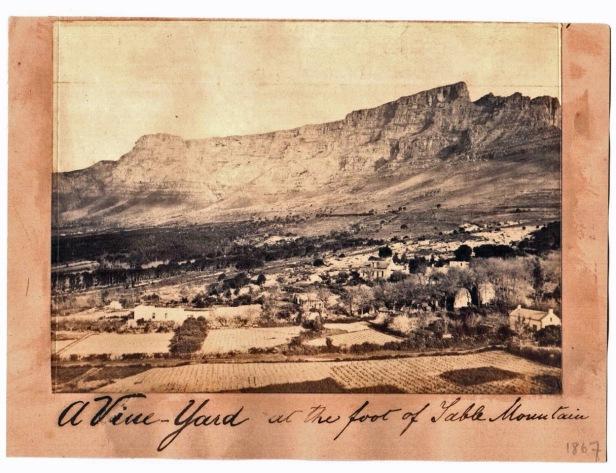 Vinyards Cape Town 2