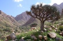 Mount Elba