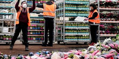 Dutch dump flowers as demand falls because of Coronavirus